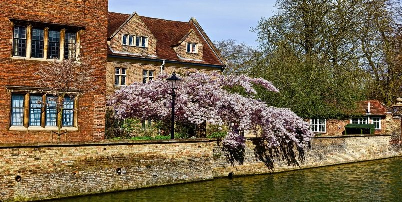 Cambridge Blossom on the Banks of the River